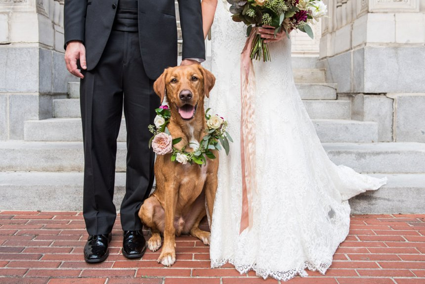 wedding dog with floral collar at tutwiler hotel Birmingham